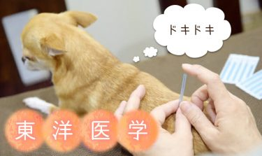 A veterinarian will teach you how to treat and prevent